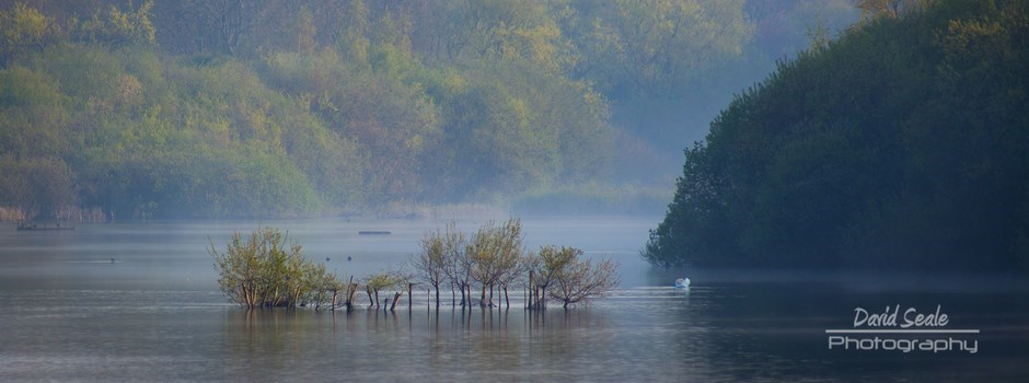 Trees in the water at Ruislip Lido
